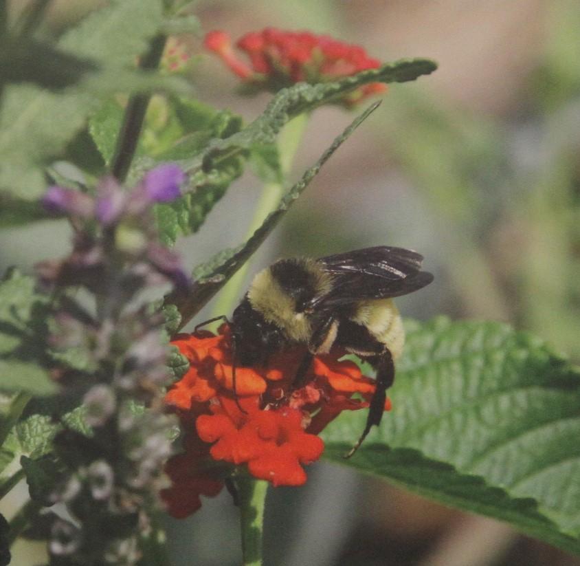 Bee Amazing