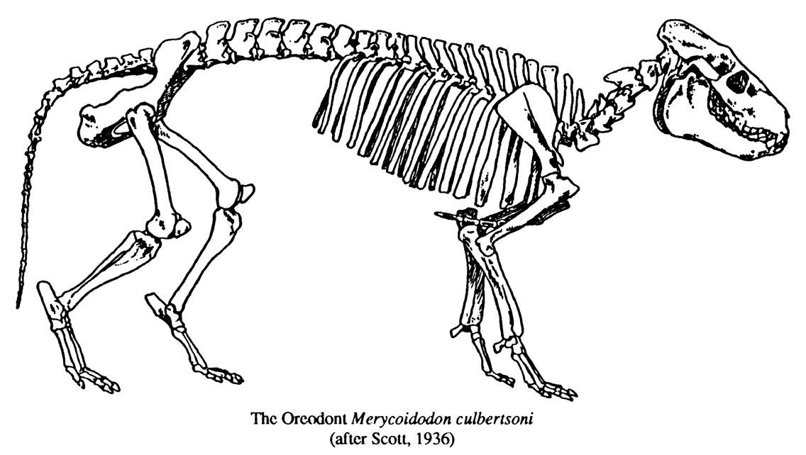 Project Oreodont: Preparing a Historic Backlog