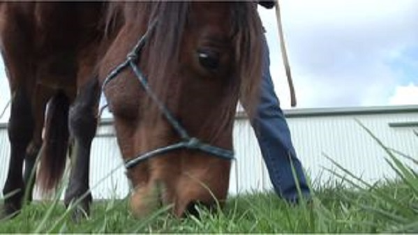 WATE: Injured Horse Becomes Therapy Animal With Horse Haven's Help