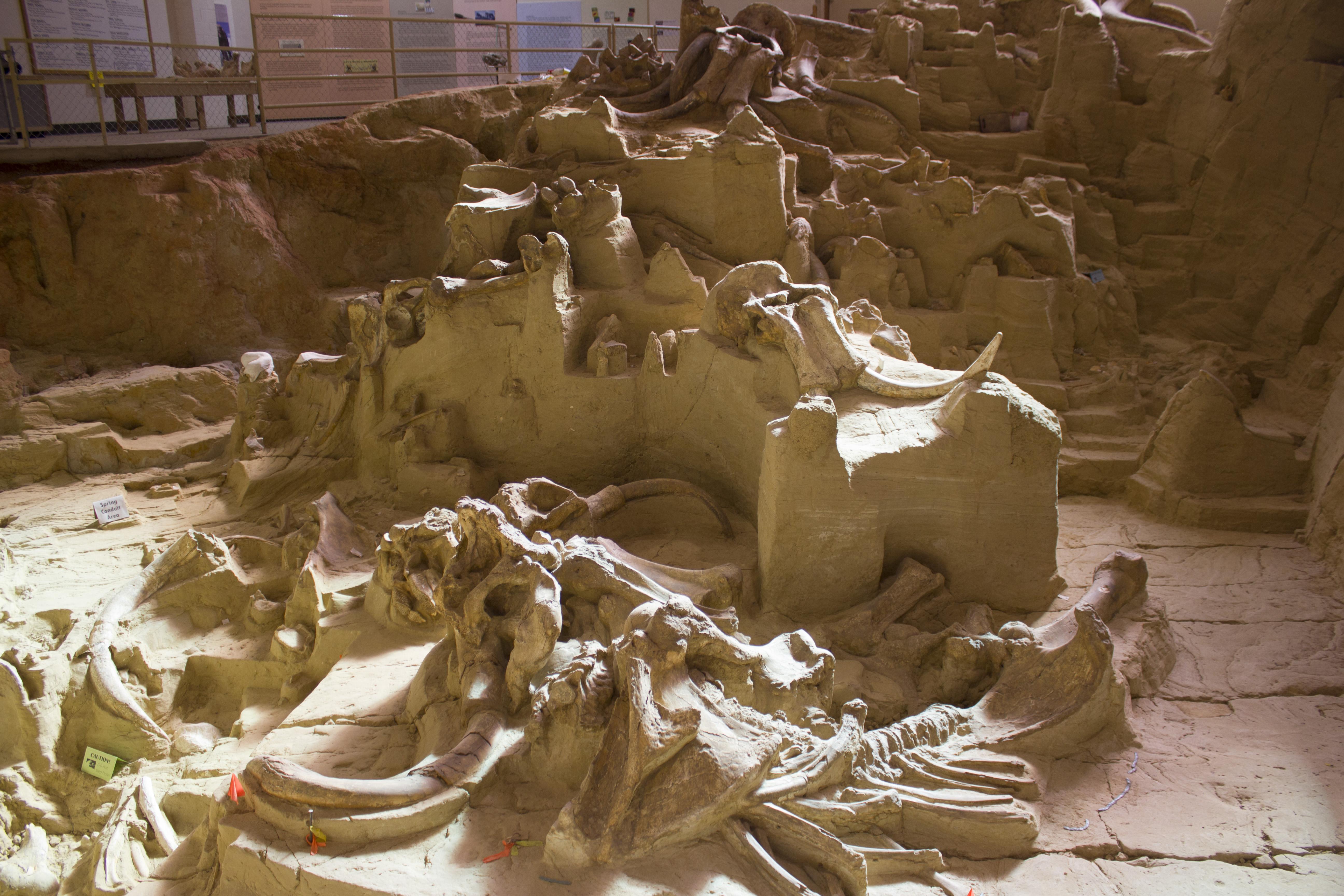 The Mammoth Site Bonebed