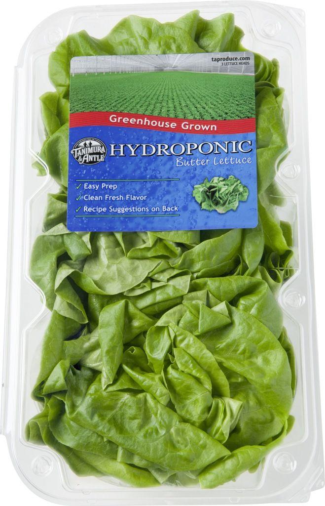 Hydroponic Butter Lettuce