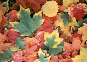Plant Palette: Time for Fall Gardening