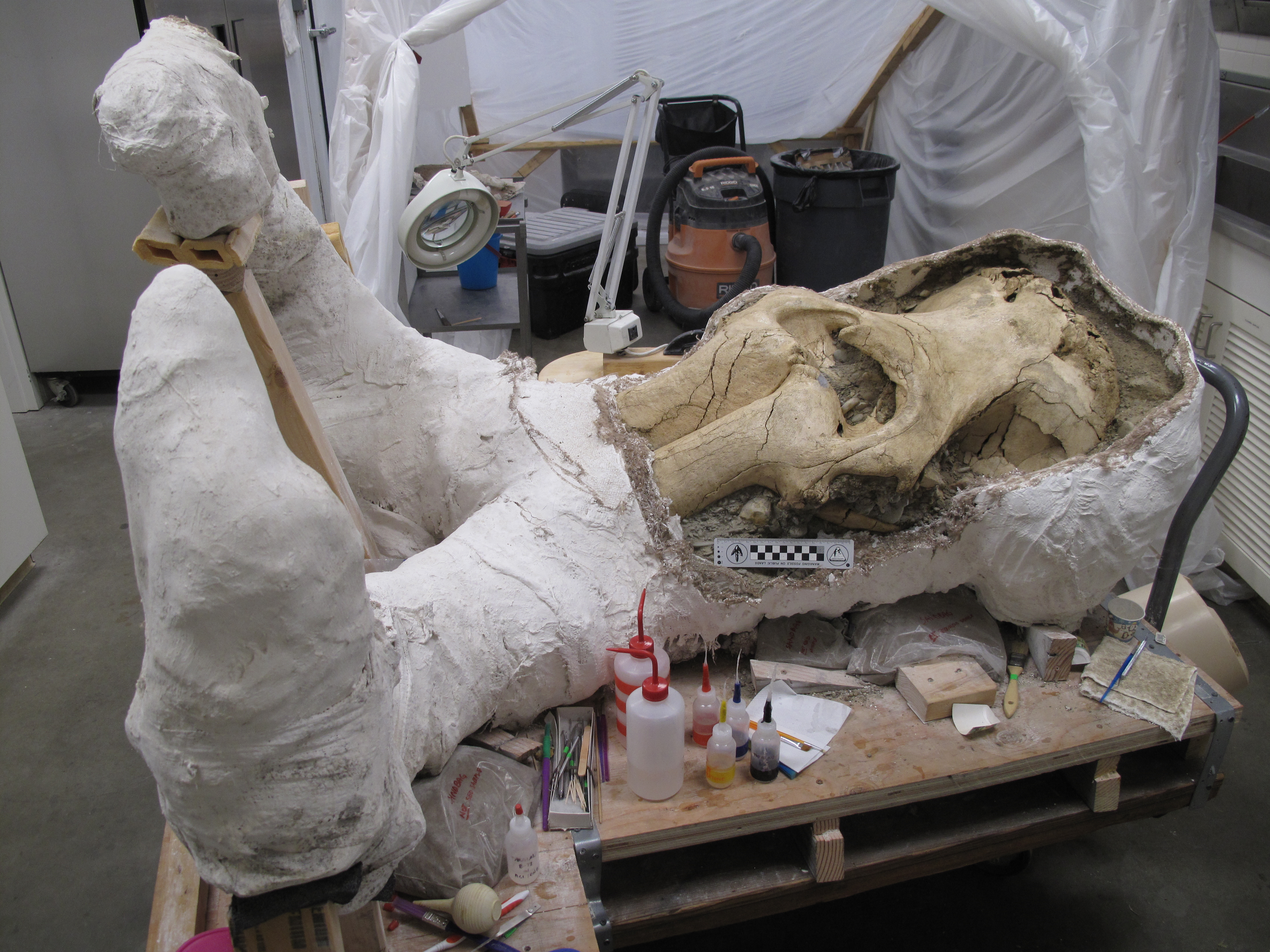Unlocking an Island Mystery about the Pygmy Mammoths