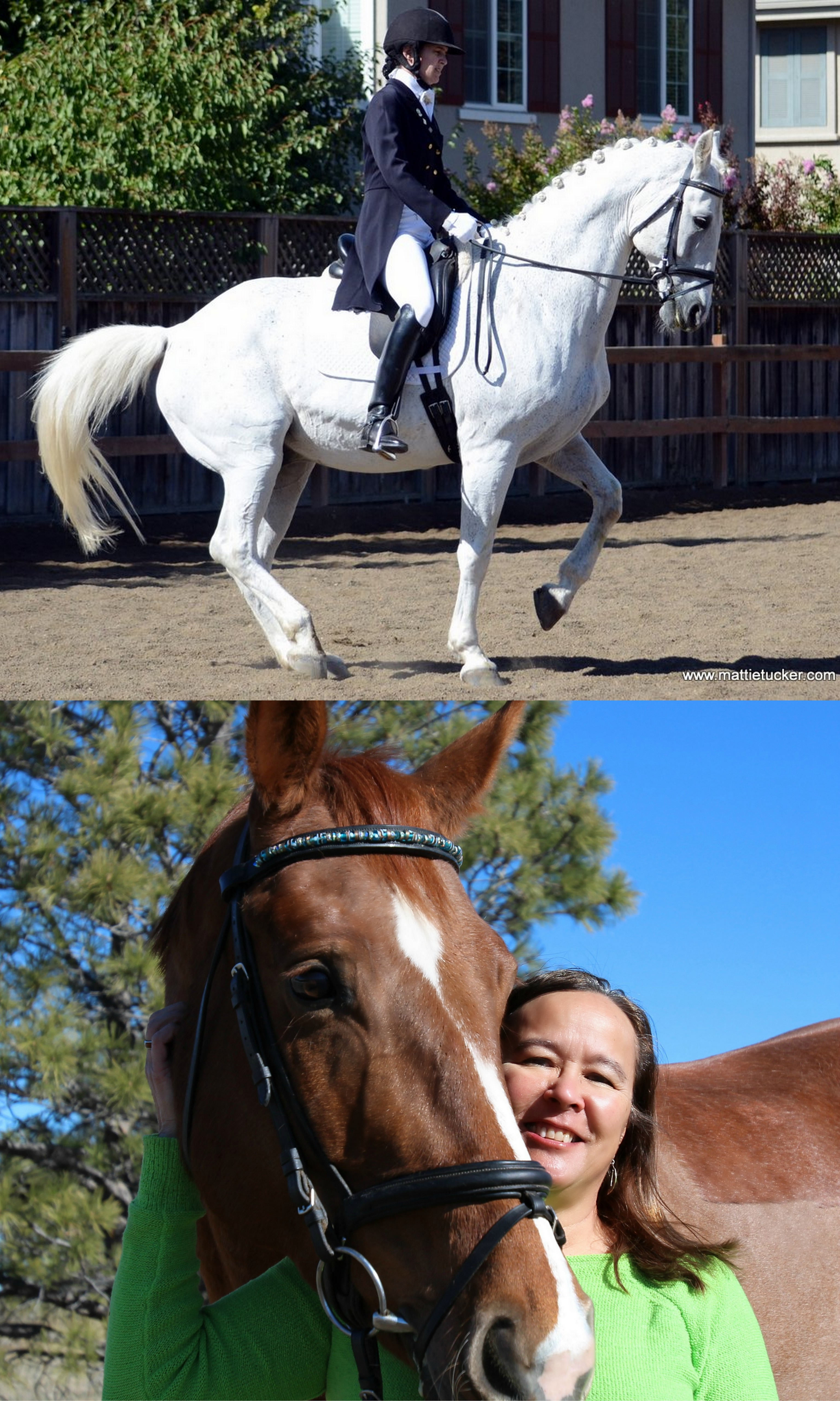 TDF's Shannon Foundation Fund Awards Two Grants to Dressage Judges