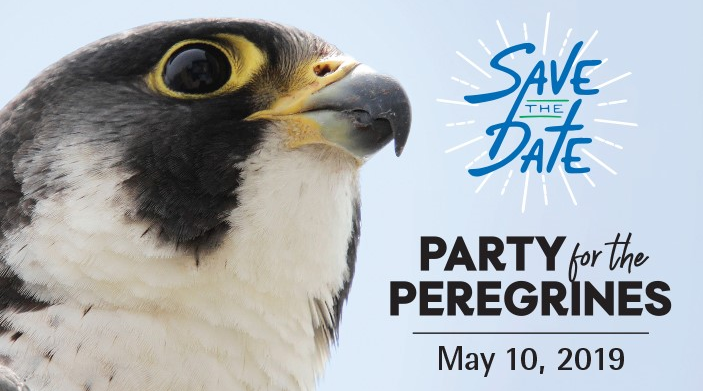 2019 Party For the Peregrines