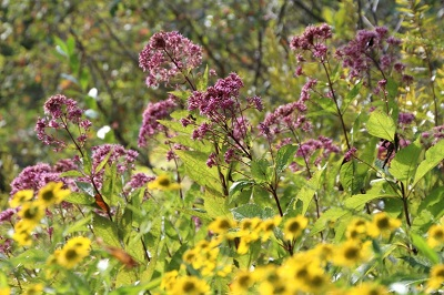 Fall Open House & Native Plant Sale