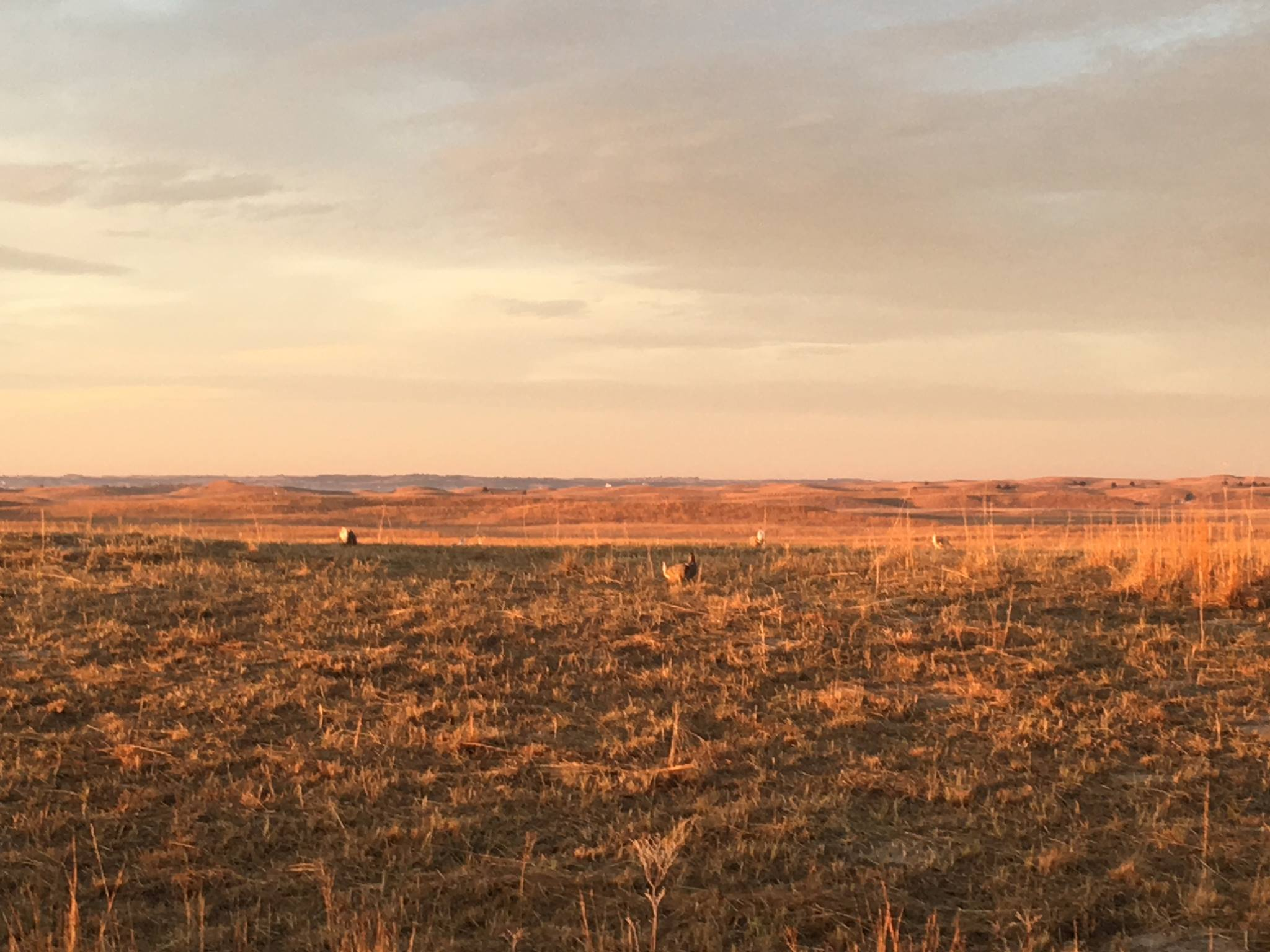 CE: Great Prairie Chicken and Sandhills Tour