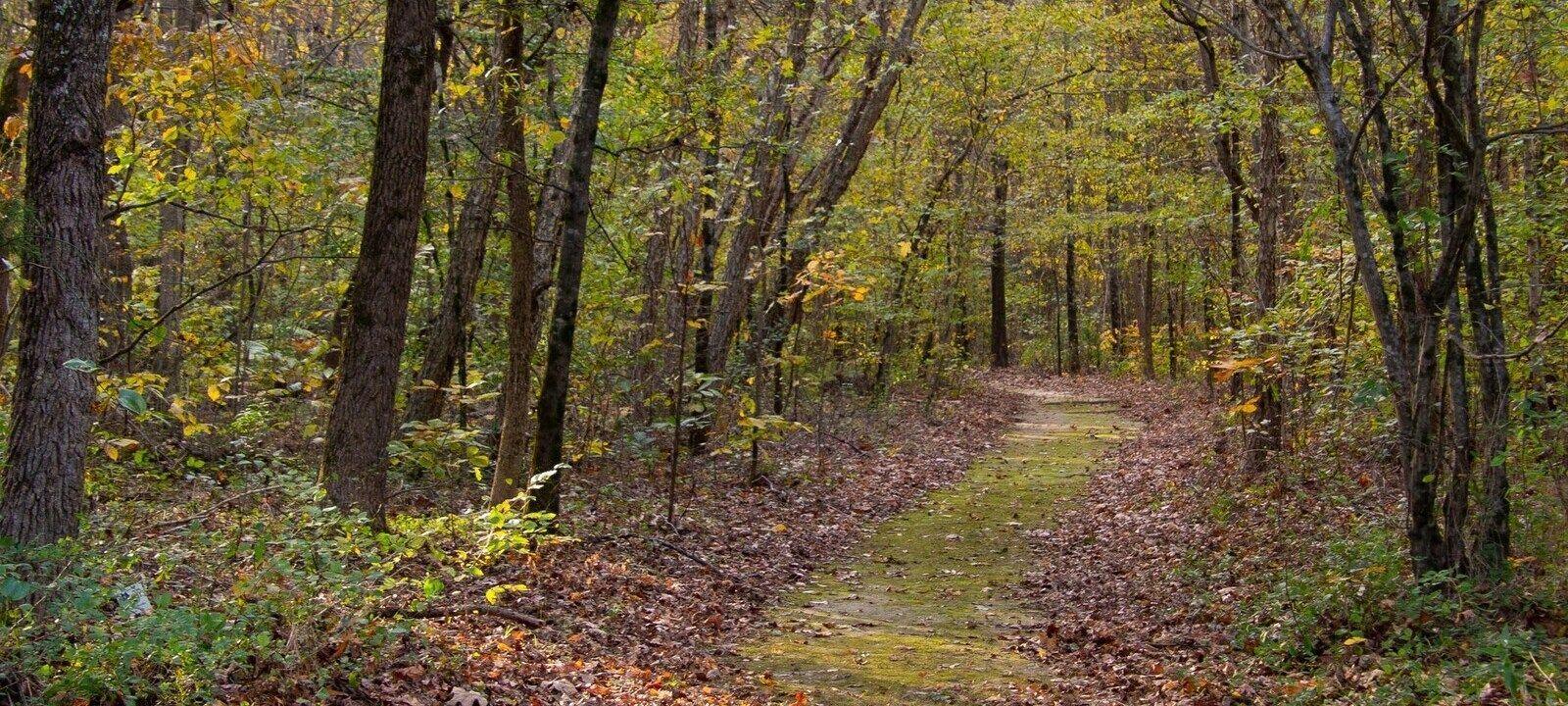 Explore nature and the Underground Railroad