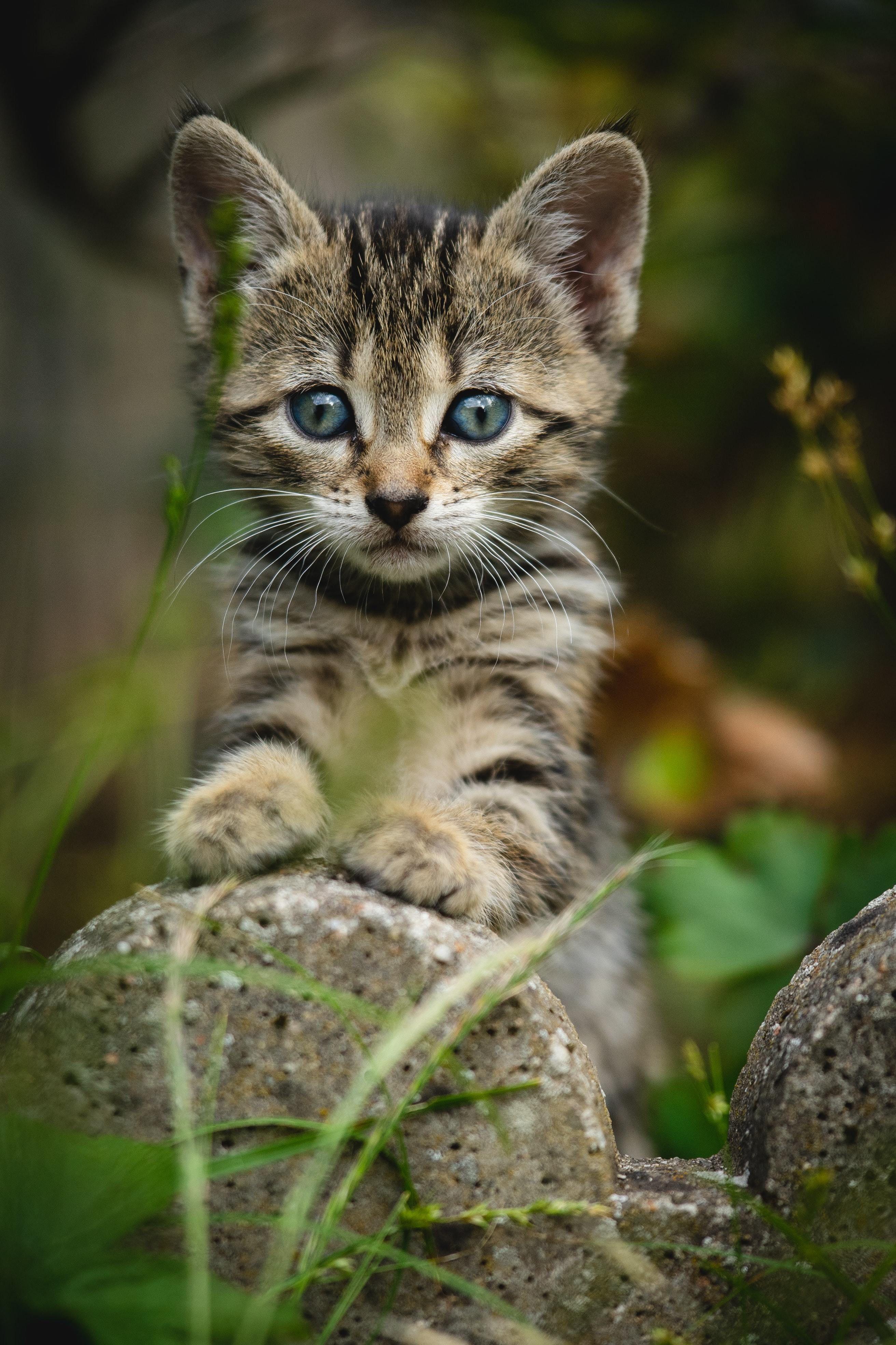 Clinic Corner: Kitten Season and TNR