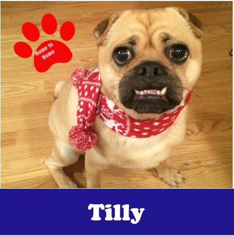 Tilly-H2H