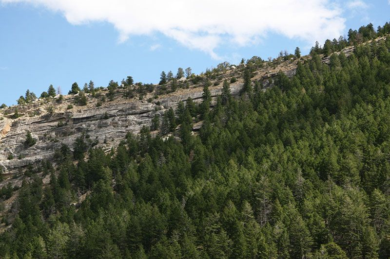 Conifer Habitat North Facing Slope
