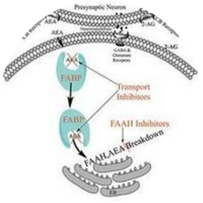 FAAH Inhibitor Program