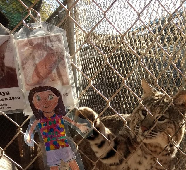 The Adventures of Flat Ella at Southwest Wildlife