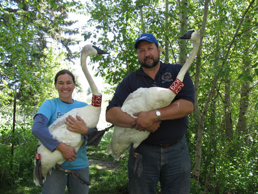 22ND TRUMPETER SWAN SOCIETY CONFERENCE