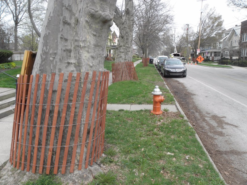 Trees protected on north side of Franklin Blvd.