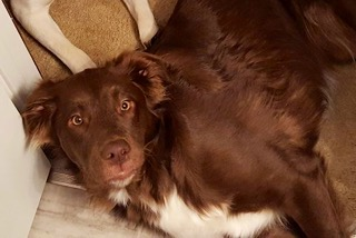Copper - ADOPTED