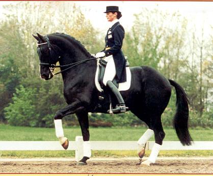 State Equestrian
