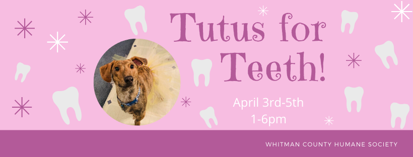 Tutus for Teeth is Back!