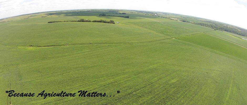 L&E Corn Field
