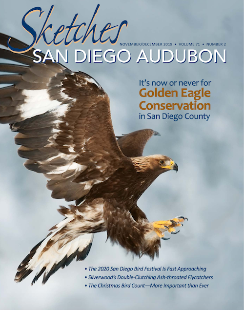 'Excellence in Journalism' Awarded to Sketches article on Golden Eagle Conservation