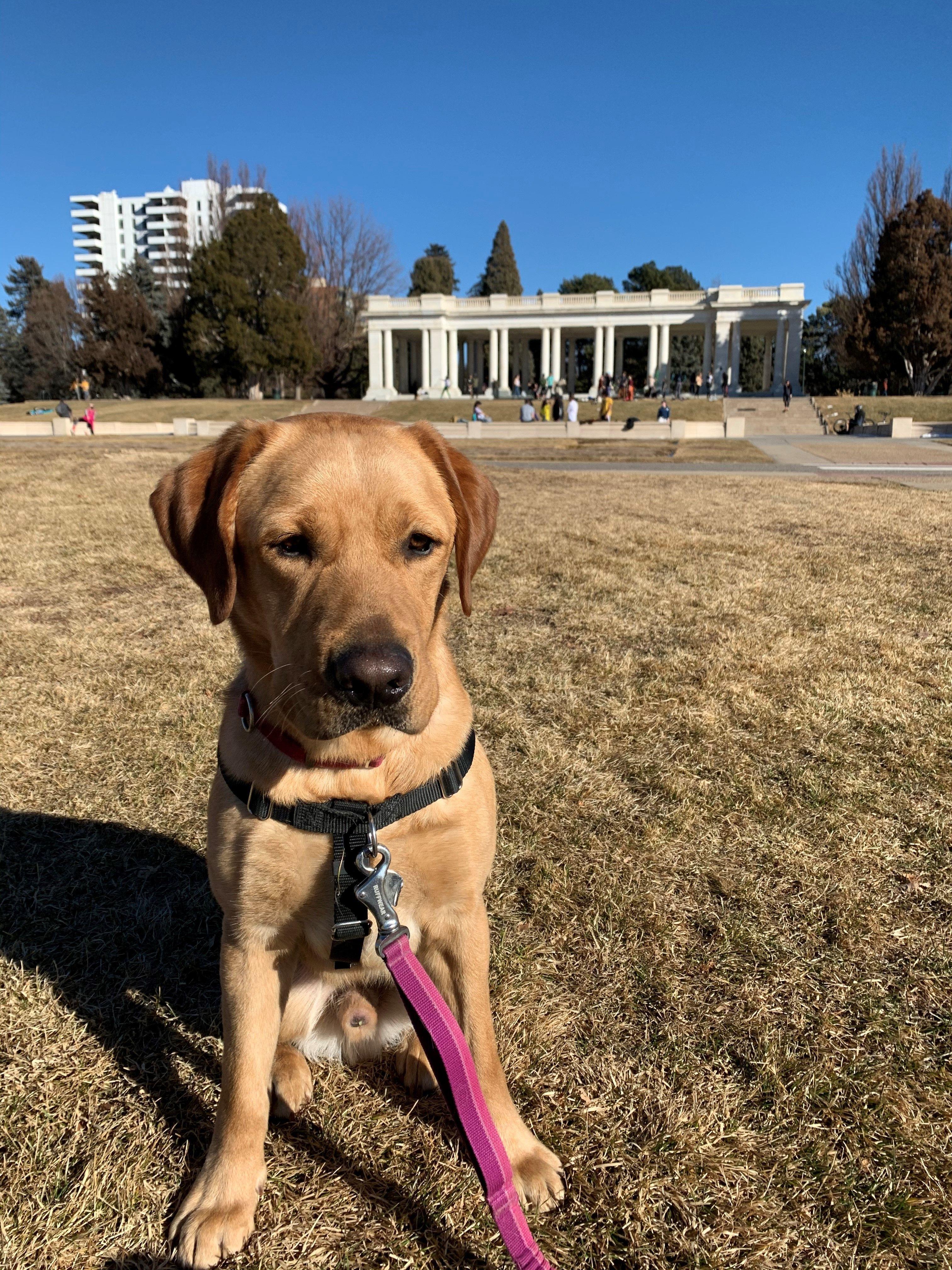 Grayson exploring Denver