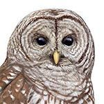 October 27, 2021: The World of Owls