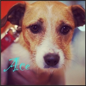 Ace - ADOPTED