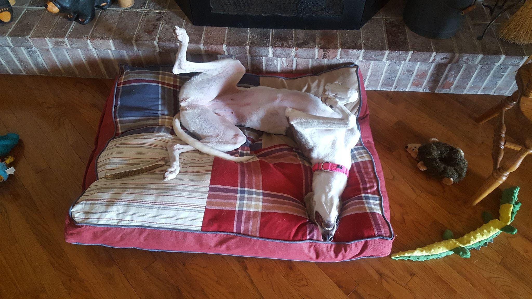 Adoption Event - Three Dog Bakery - Leawood