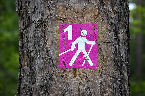 Nordic Walking Group