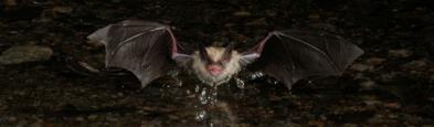 7 pm Bat Netting Event