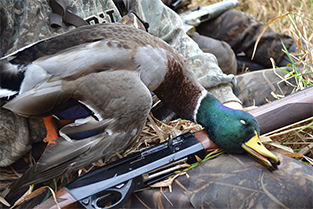 Opening Day: Rebirth of a Waterfowl Hunter's Soul
