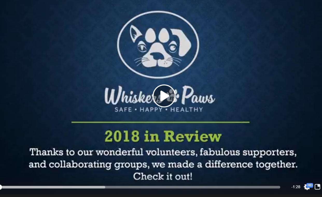 582 Cats Helped in 2018