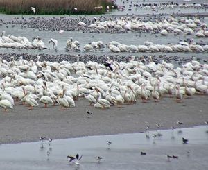 Bolivar Flats Bird Cam