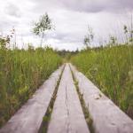 Among Many Pathways