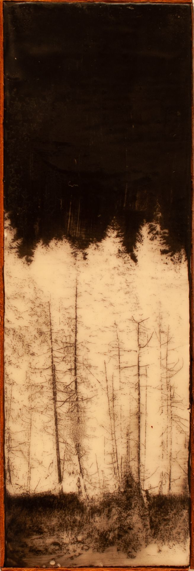 "Laurel Shepard Kvale - ""Treeline"""