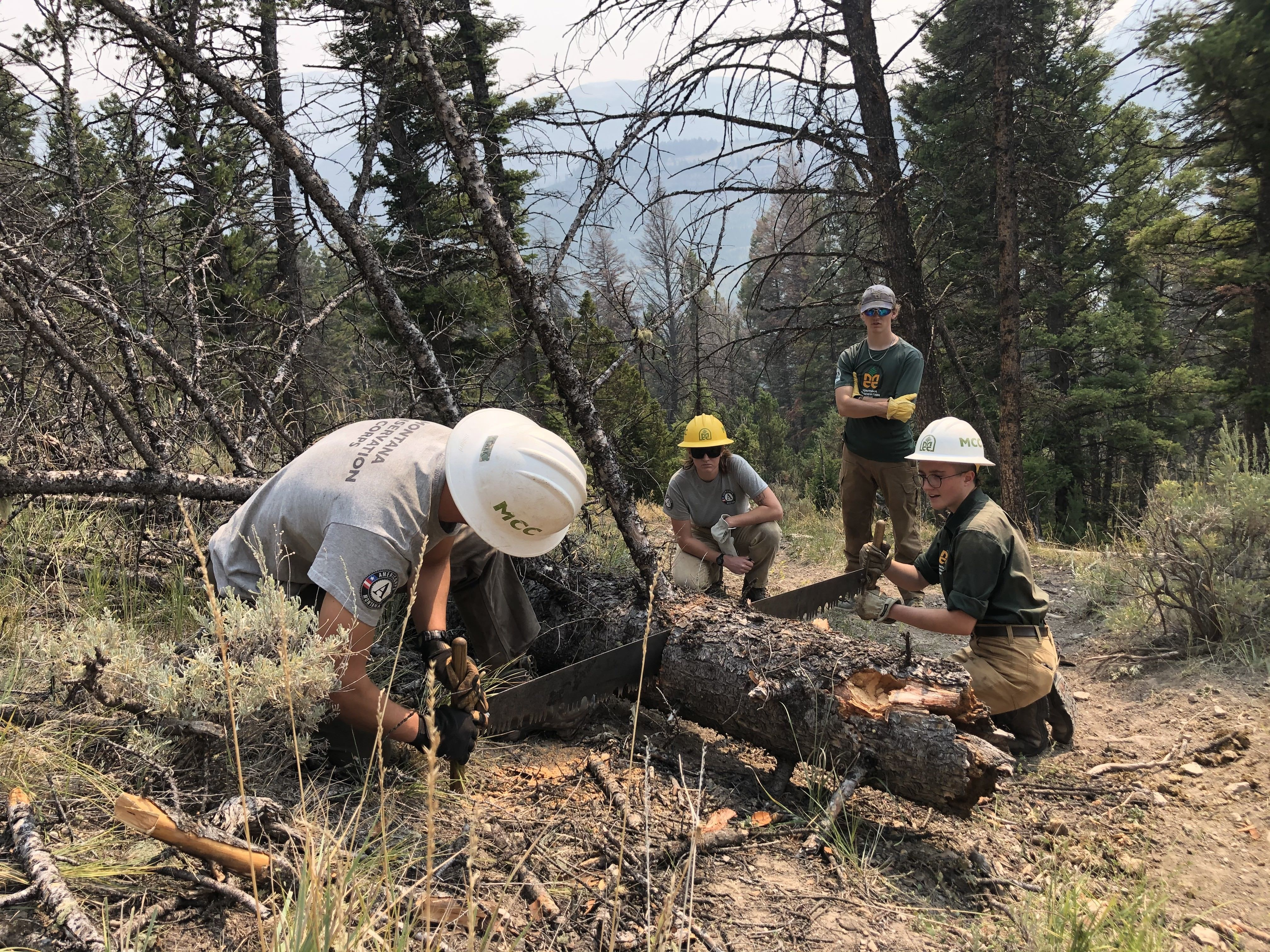 A crew uses a crosscut to clear a log off the trail