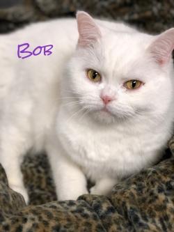 Bob 31719