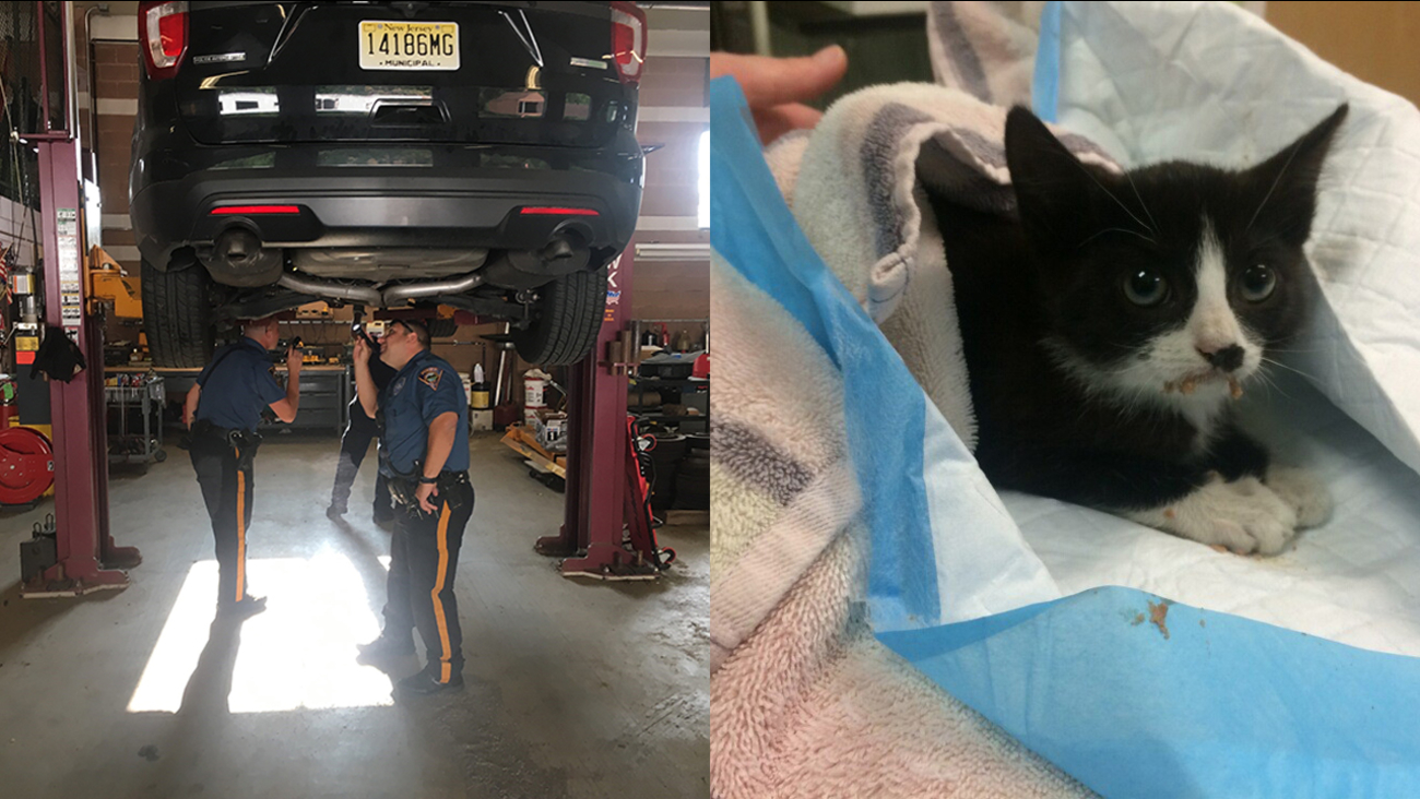 Injured kitten rescued from undercarriage of police car in New Jersey