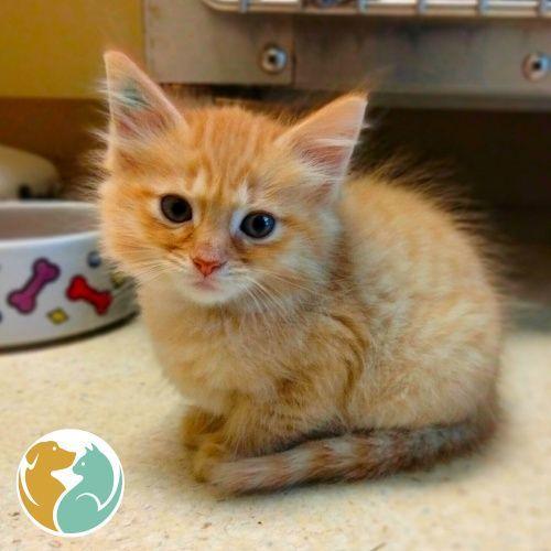 MIMOLETTE - Adoption Pending!