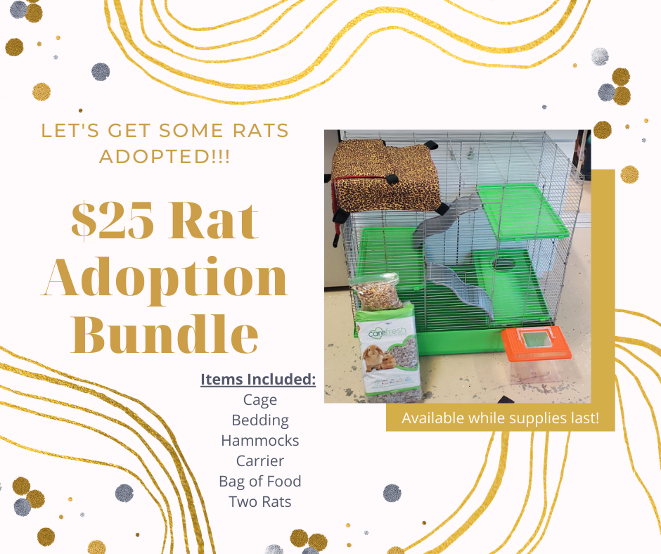 Rat Adoption Bundle