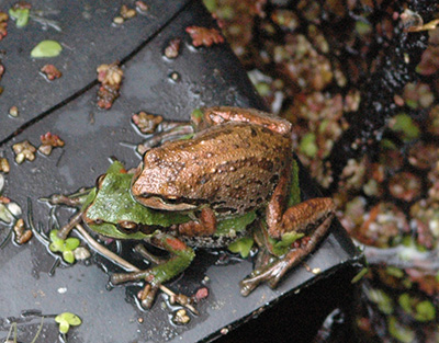 Amphibians and Reptiles of the Park