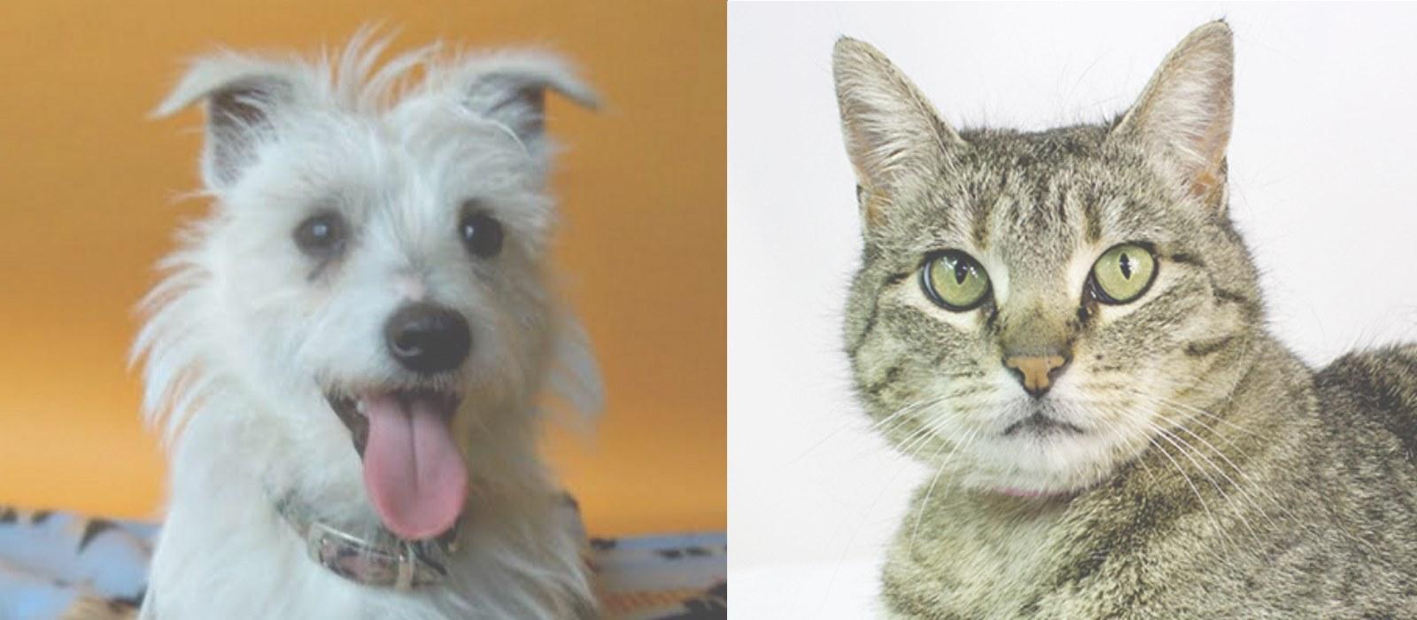 Consider Adopting a Shelter Pet