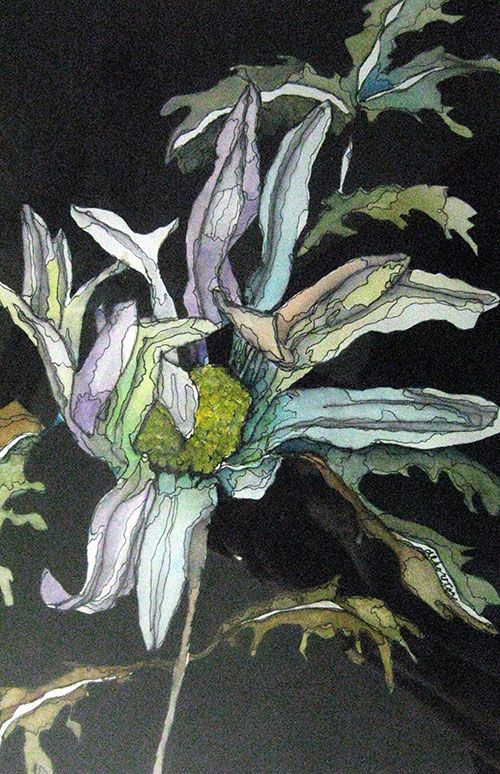 "White Daisy 1,, watercolor and Ink, 7-1/2"" x 11-1/2"""