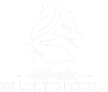 Nebraska Wildlife Rehab, Inc.