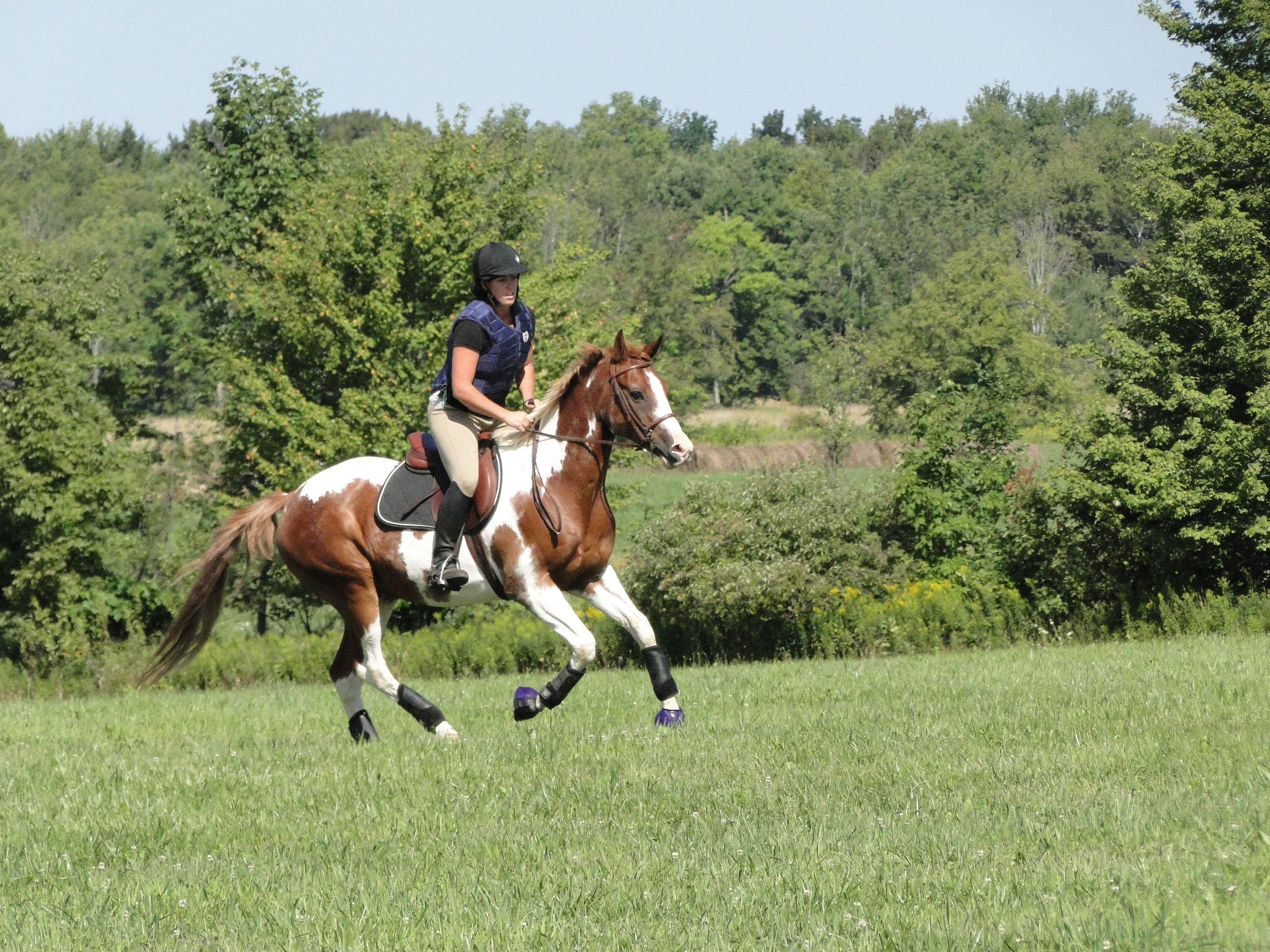 Equestrian at Home Activities (PDF)