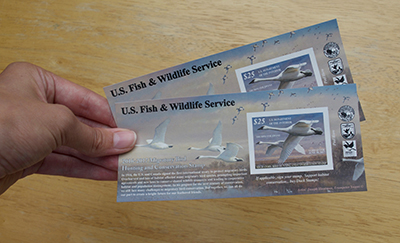 Why I Buy Two Duck Stamps