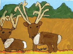 Rocky Mountain Duo