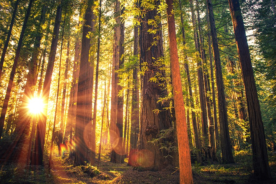700 Acres of Massive 1,000-Year-old Redwoods Are Being Turned into a Public Park