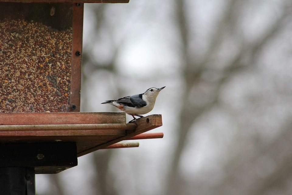 Brrr Feeding! Tips to Help Birds During Winter Weather