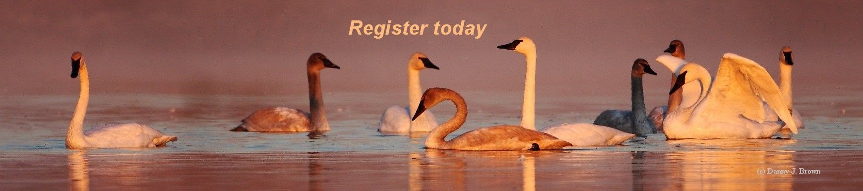 Register for the 25th Swan Conference of The Trumpeter Swan Society